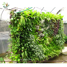 China UVG GRW032 Green Grass Living Wall Garden Landscaping Plant Artificial Walls supplier